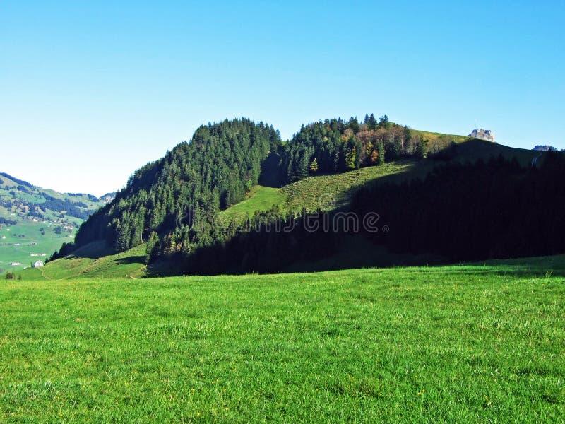 Alpint betar och ängar i den Apenzellerland regionen och på lutningarna av den Alpstein bergskedjan arkivbilder