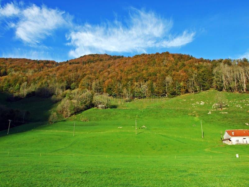 Alpint betar och ängar i den Apenzellerland regionen och på lutningarna av den Alpstein bergskedjan arkivfoton