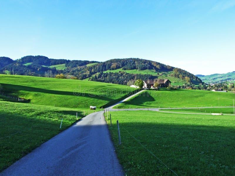 Alpint betar och ängar i den Apenzellerland regionen och på lutningarna av den Alpstein bergskedjan royaltyfri bild