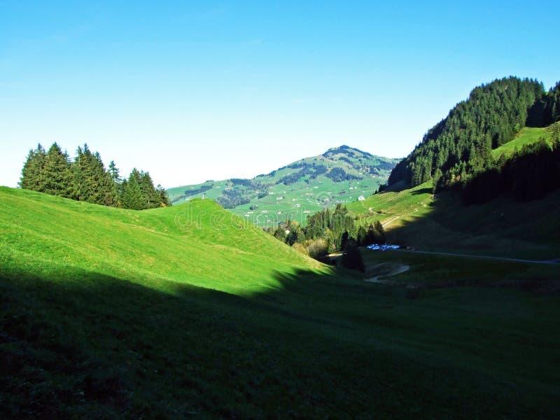 Alpint betar och ängar i den Apenzellerland regionen och pÃ¥ lutningarna av den Alpstein bergskedjan fotografering för bildbyråer