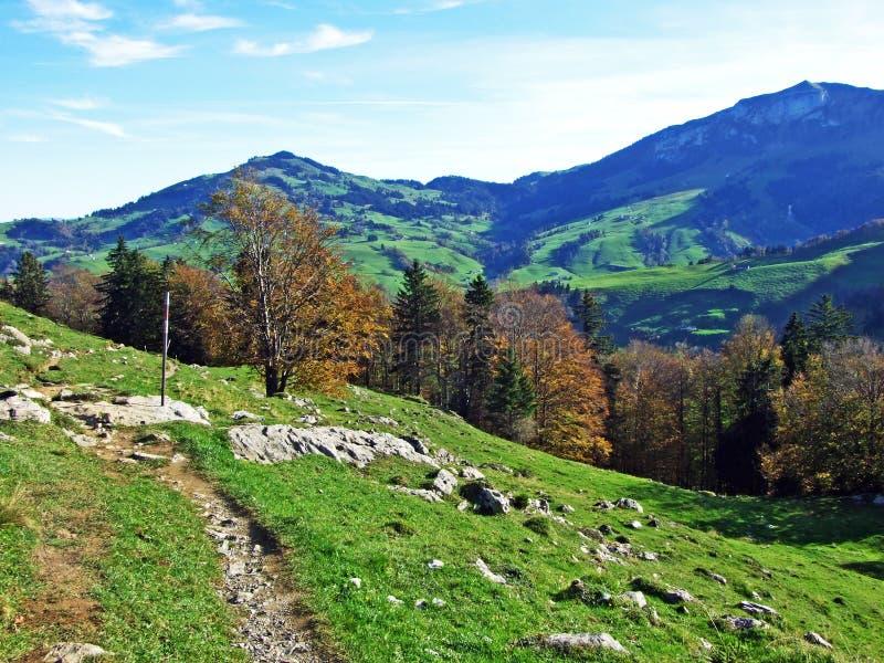 Alpint betar och ängar i den Apenzellerland regionen och på lutningarna av den Alpstein bergskedjan royaltyfri fotografi