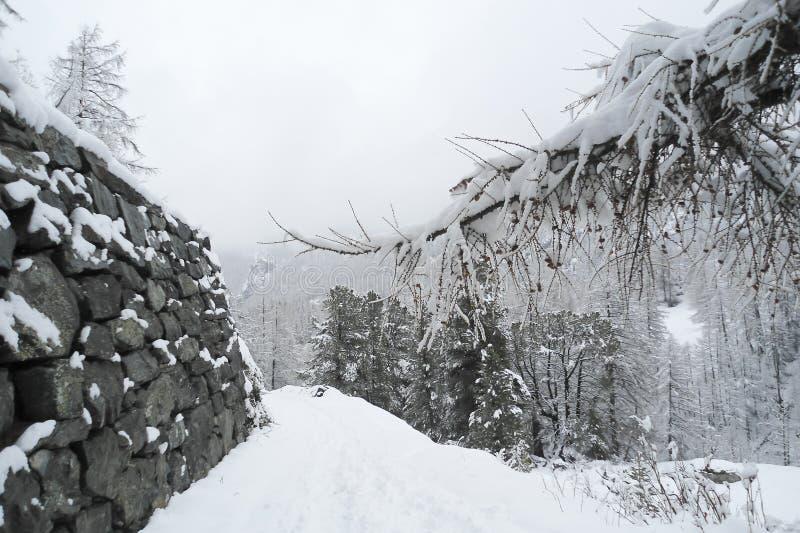 alpint landskap med en gammal stenhuggeriarbetevägg längs skogsmarkvägen royaltyfri bild