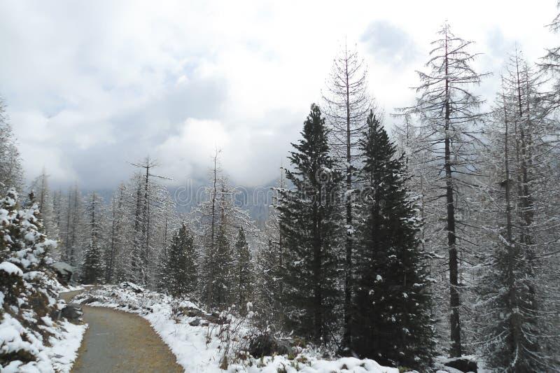 Alpint landskap med en träväg, molnig dag i vinter royaltyfri foto