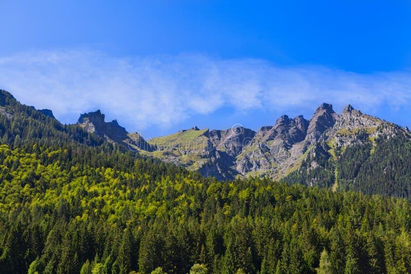 Alpint landskap och skog royaltyfri bild