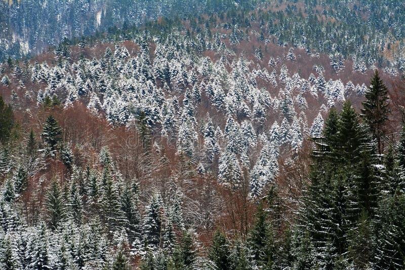 Alpint vinterlandskap i Transylvanian fjällängar royaltyfri fotografi