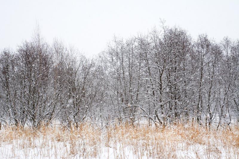 Alpint vinterlandskap i Transylvanian fjällängar arkivbilder