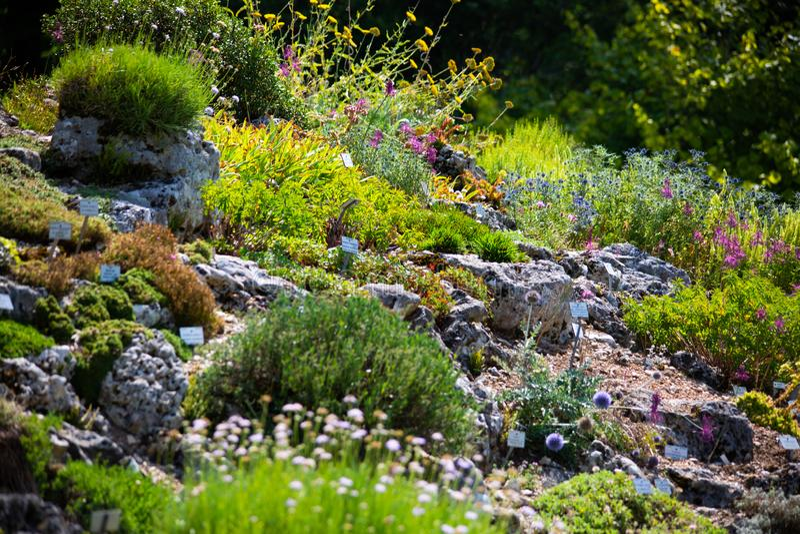 Alpinum no jardim botânico, munich imagens de stock royalty free