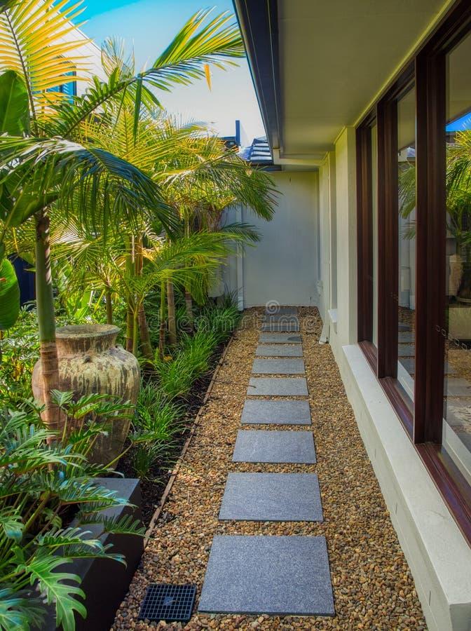 Alpondras cinzentas nos seixos e no jardim tropical imagem de stock