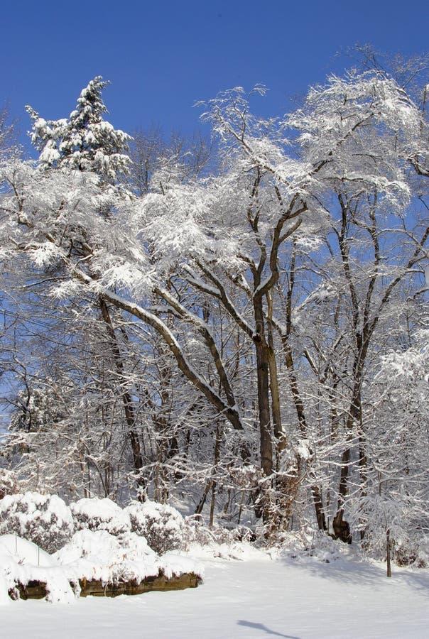 alps покрыли древесины зимы малого снежка места дома швейцарские стоковая фотография