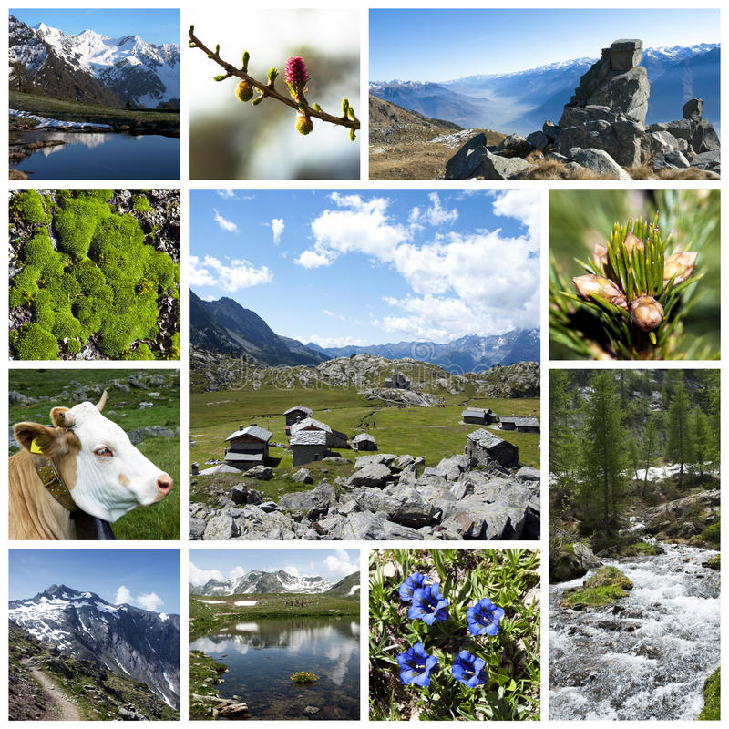 Download Alps collage stock photo. Image of musk, gentian, peaceful - 16065838