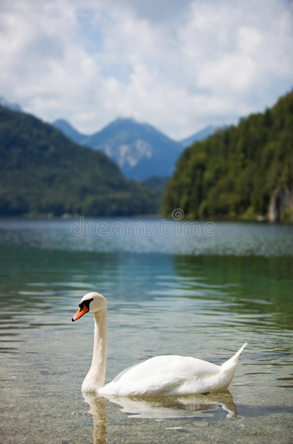 Download Alps lake with swan stock photo. Image of view, swan - 14120910