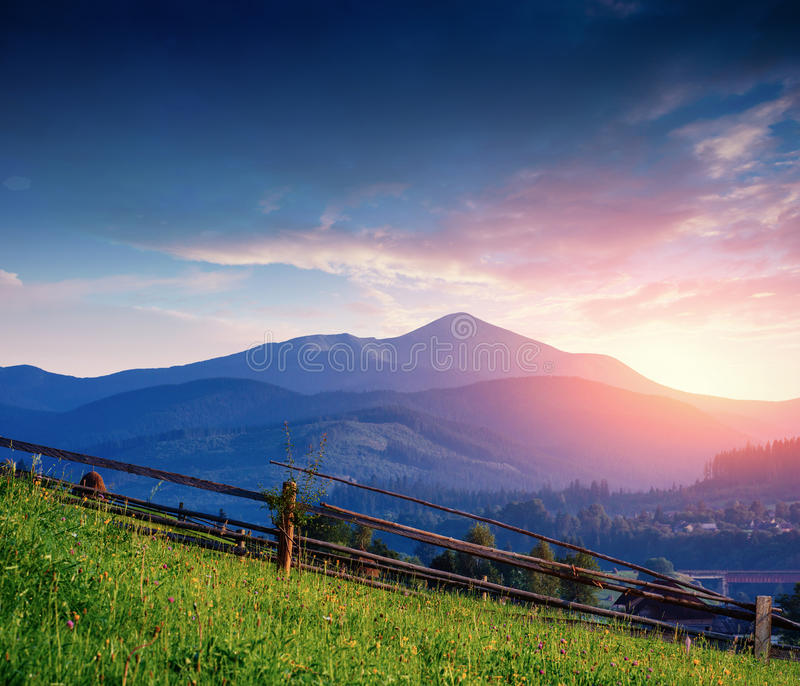 Alps mountain meadow tranquil summer view royalty free stock photos