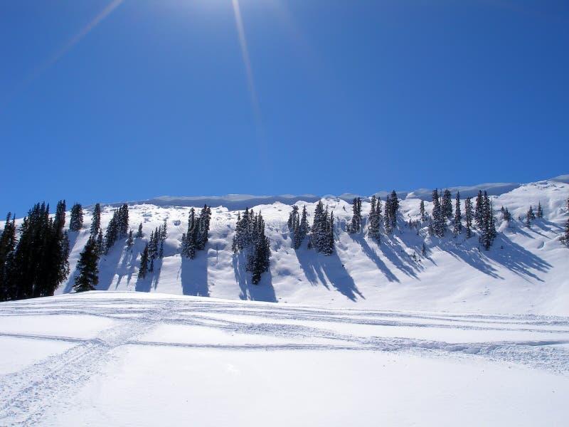 alps räknade trän för vintern för schweizare för snow för husplatsen lilla arkivbilder