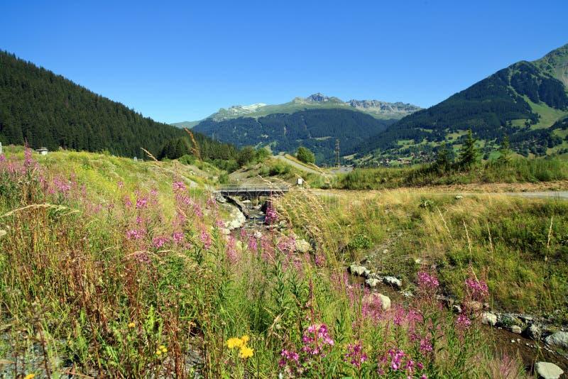 alpsliggandeschweizare royaltyfri foto