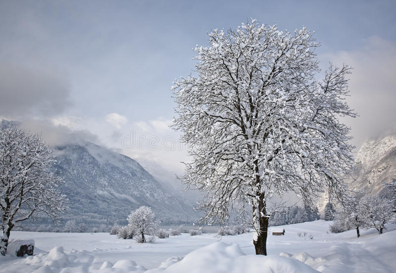 alpsliggandevinter royaltyfri foto