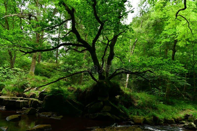 Alrededor de la ciudad de Scarborough en el Reino Unido, bosque, cascada foto de archivo