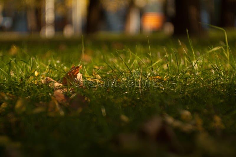 als achtergrond, groen gras op het gazon in de stad stock fotografie