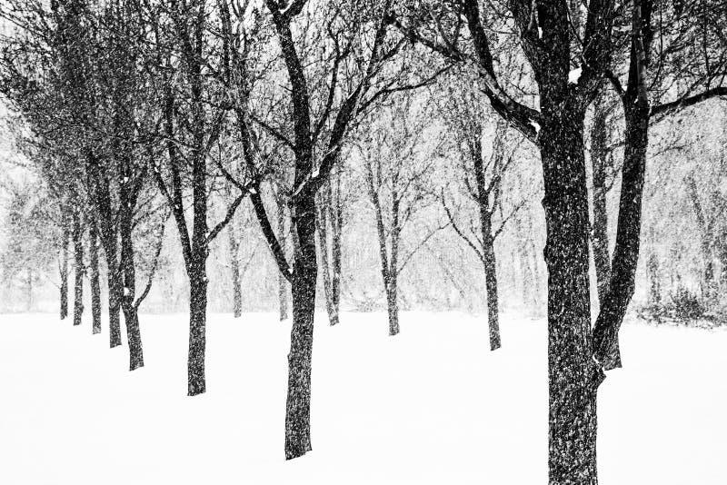 Als I-kant met naakte bomen in de winter royalty-vrije stock fotografie