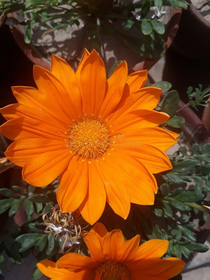 Als you're het verzenden van bloemen, kansen is zou u een person'sdag willen omhoog ophelderen stock foto's