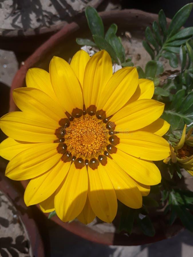 Als you're het verzenden van bloemen, kansen is zou u een person'sdag willen omhoog ophelderen royalty-vrije stock foto's