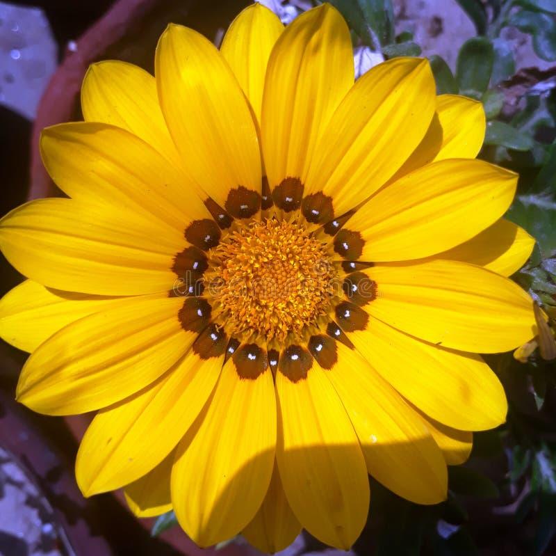 Als you're het verzenden van bloemen, kansen is zou u een person'sdag willen omhoog ophelderen stock foto