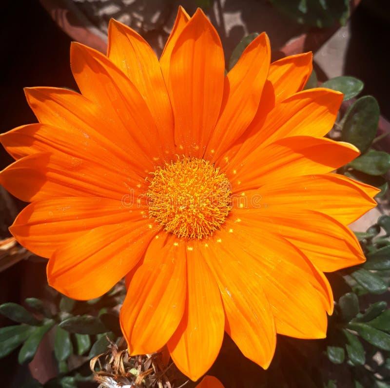 Als you're het verzenden van bloemen, kansen is zou u een person'sdag willen omhoog ophelderen stock afbeeldingen