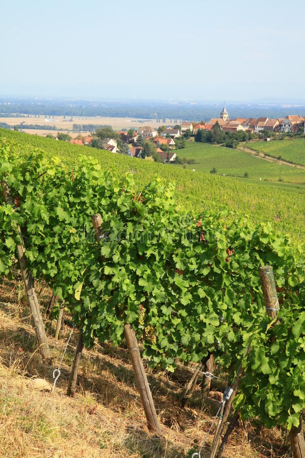 Download Alsace Landscape Royalty Free Stock Photos - Image: 26598528