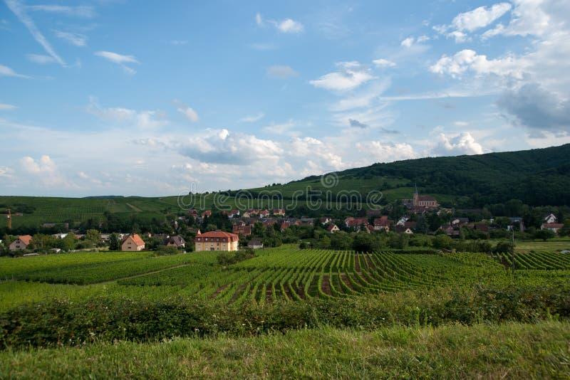 Alsace landskap och vinewyard arkivfoton