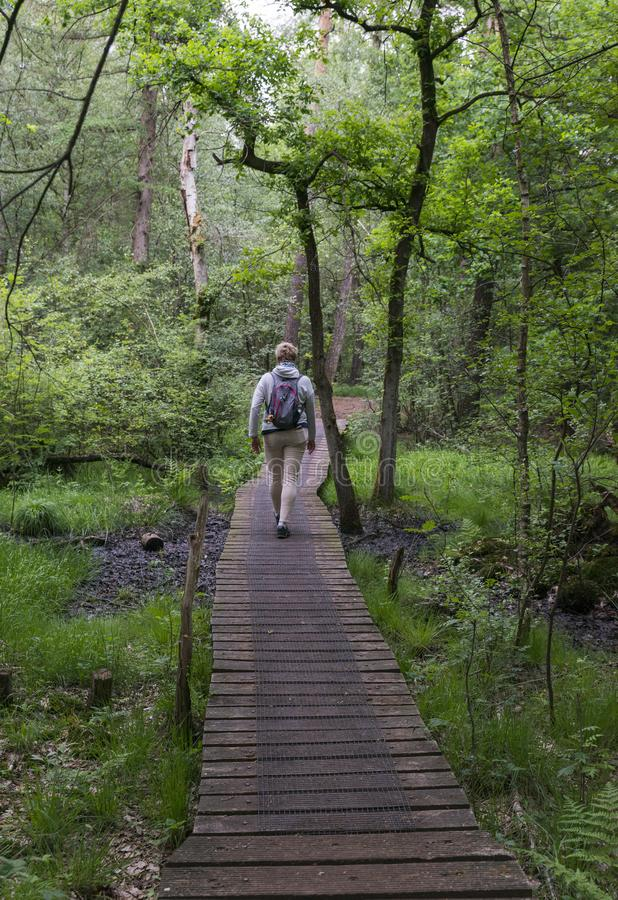 Woman walking in the forest. Alstatte,Germany,16-may-2018:Woman walking in the forest of alstatte, alstatte is a nature area on the border of holland and germany royalty free stock images
