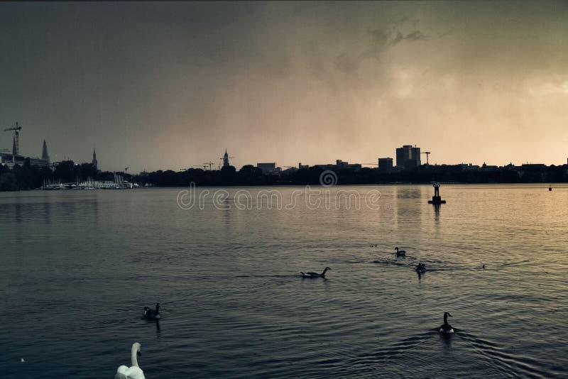 Alstermeer in van de de eendzwaan van Hamburg Duitsland mensen die van het de stadspark de beroemde de varende zonsondergang van  royalty-vrije stock foto