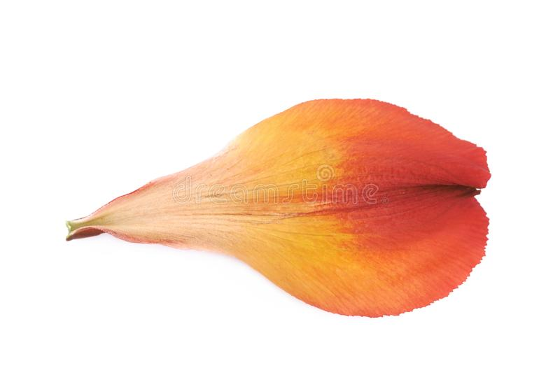Alstroemeria kwiatu ` s płatek odizolowywający obrazy stock