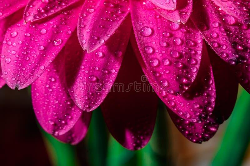 Alstroemeria- und Gerbera-Blumen mit Wassertropfen auf schwarzem Grund stockfotografie