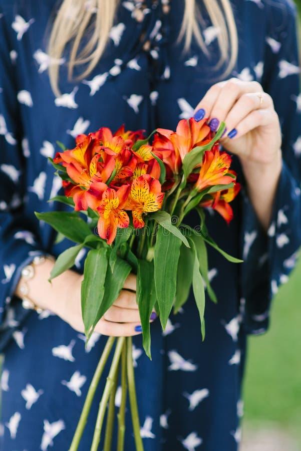 Alstroemeria Vermelho-alaranjado das flores nas mãos foto de stock