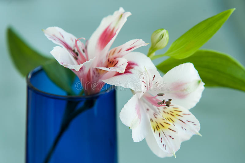 Alstroemeriabloemen royalty-vrije stock foto's