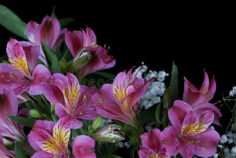 Alstroemeriablumen stockfoto