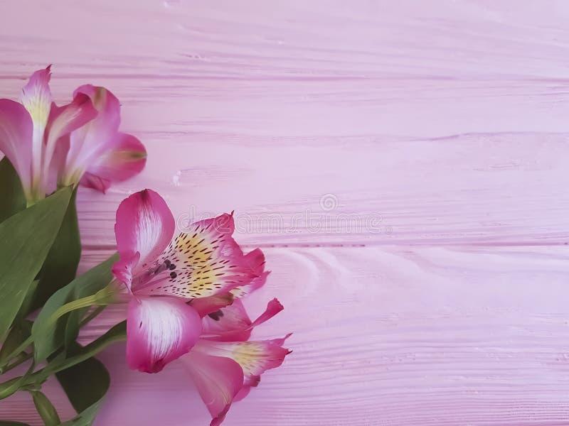 Alstroemeriaverjaardag die Romaanse uitstekende groeten op een roze houten kaderachtergrond overweldigen stock foto's
