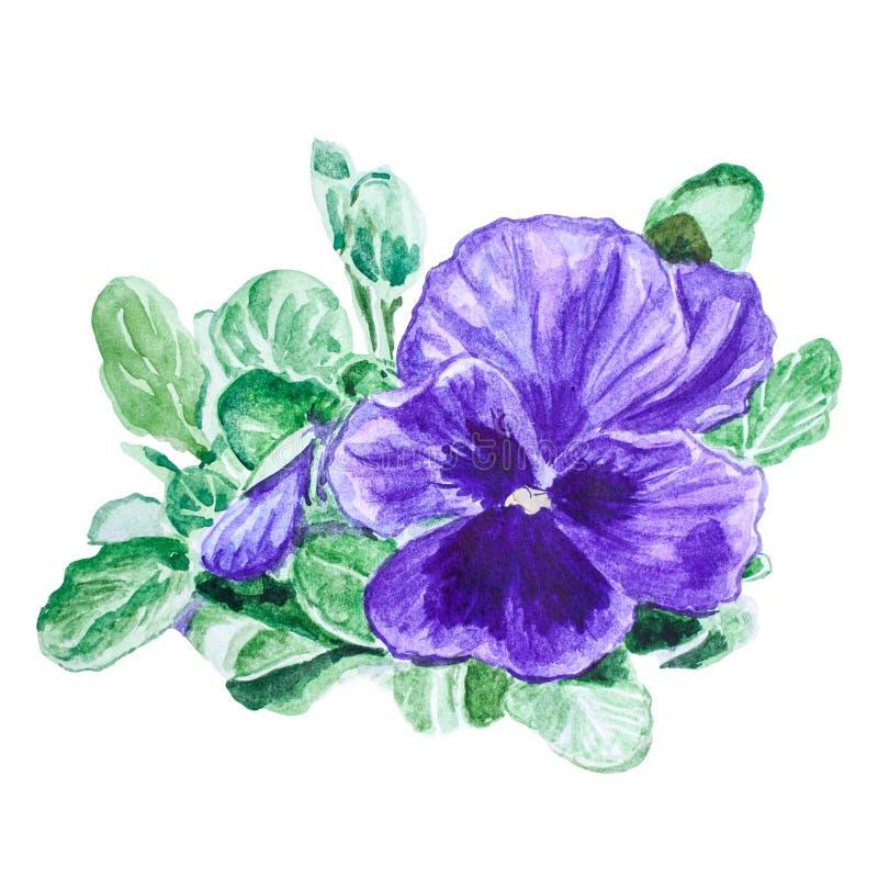 Altówka kwiat Handmade akwarela obraz ilustracji