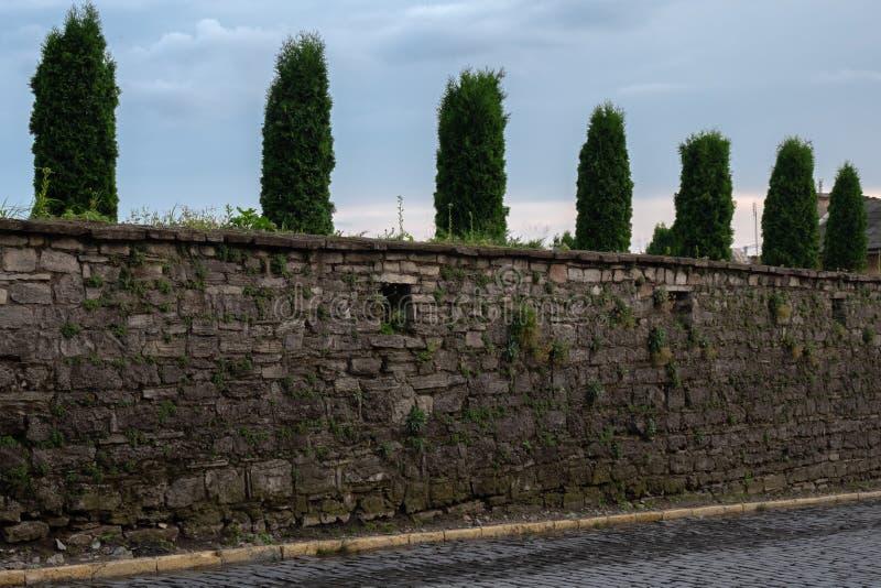 Alt, bedeckt mit Büschen des Grases, der Steinwand und der Reihe grüner Bäume hinter ihr lizenzfreie stockfotos