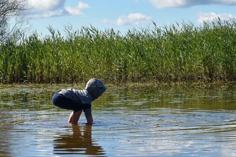 Alta erba verde intorno al lago Passeggiata del bambino in acqua immagine stock