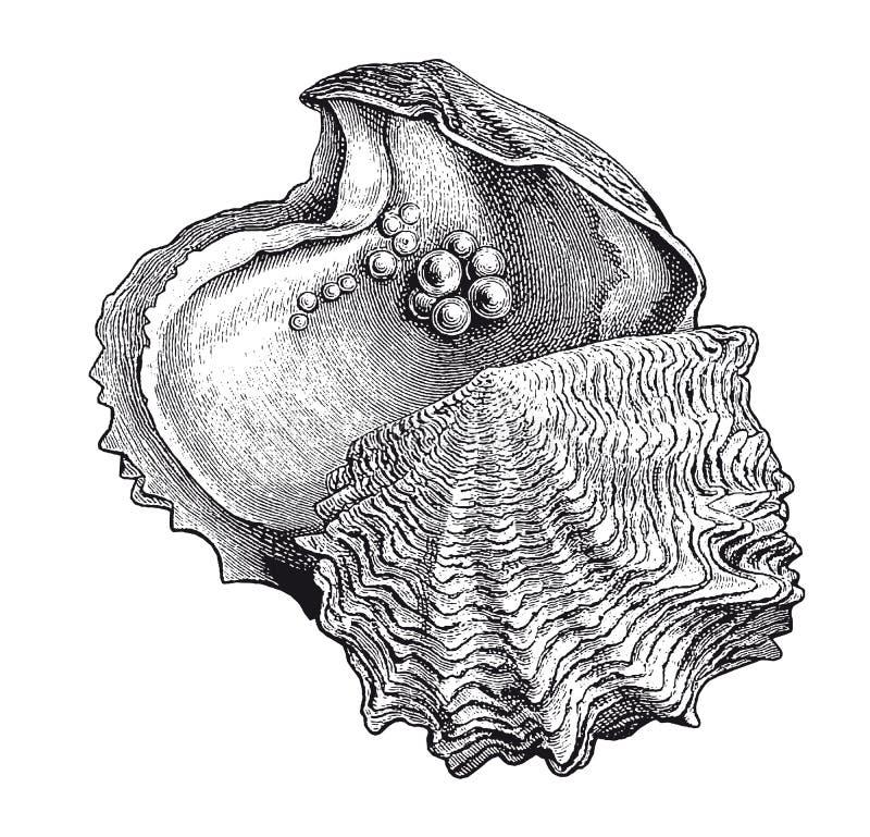 Alta incisione della perla dell'ostrica del dettaglio di vettore royalty illustrazione gratis