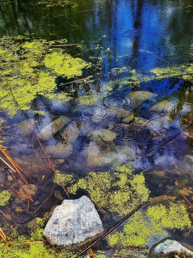 Alta Lake, Pateras, Washington June 2018 photos stock