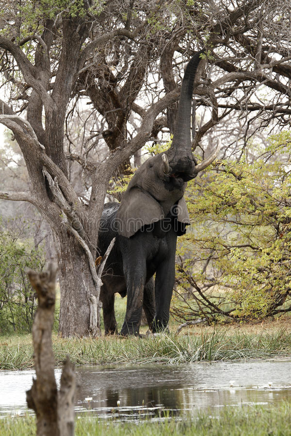 Alta luce africana fotografia stock libera da diritti