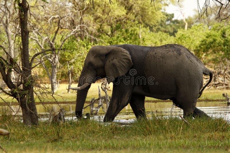 Alta luce africana fotografie stock