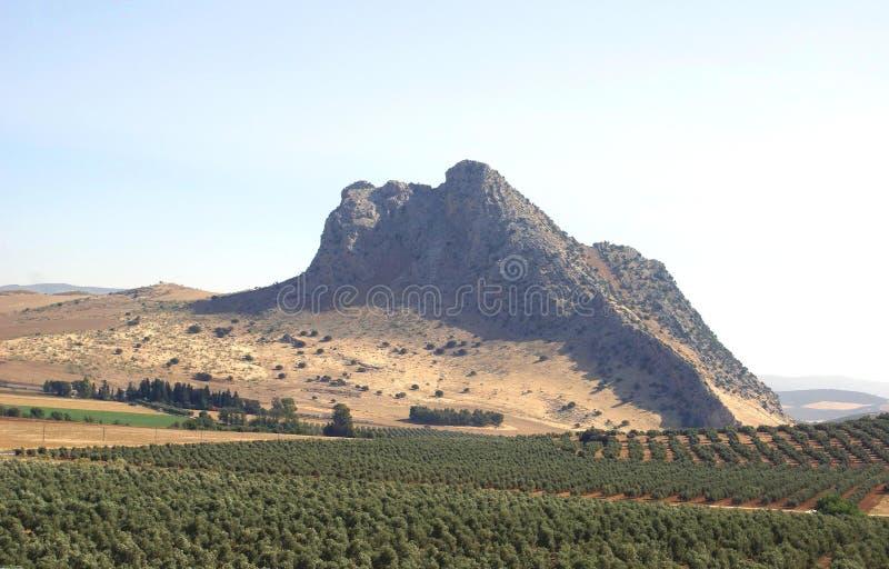 Alta montaña campos de los olivos en Málaga, España fotos de archivo libres de regalías