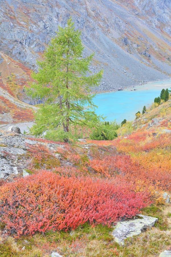 altai秋季颜色湖山绿松石 库存照片