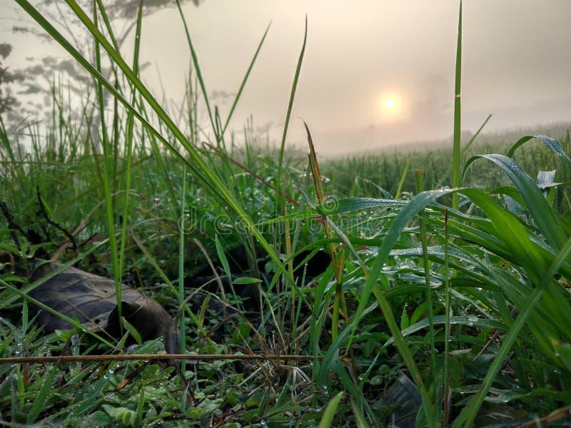 altai śródpolny Russia wschód słońca zdjęcia royalty free