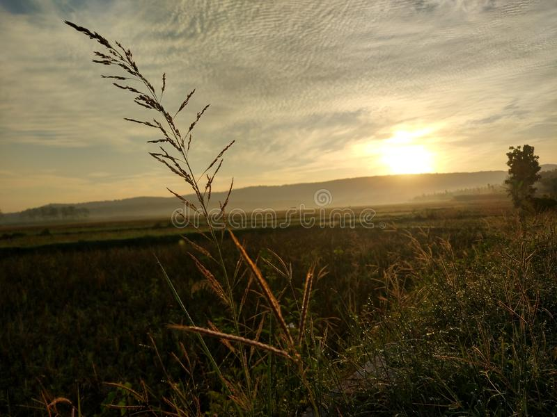 altai śródpolny Russia wschód słońca obraz royalty free