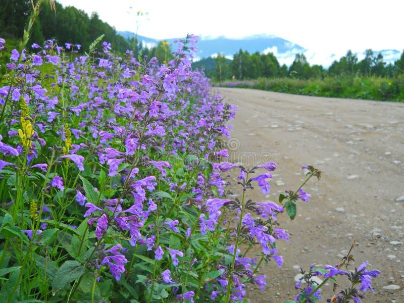 Altai imagenes de archivo