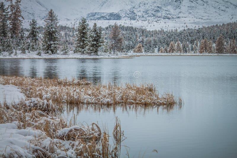 altai Der erste Schnee in den Bergen um den nicht gefrorenen See lizenzfreie stockbilder