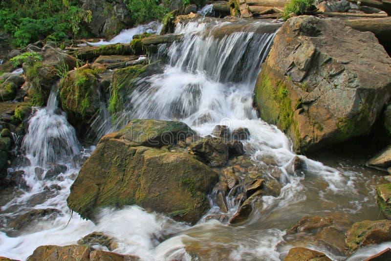 Altai, fiume di Katun immagine stock libera da diritti